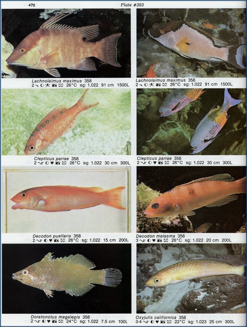Ornamental name 100 images ornamental plants for Ornamental fish