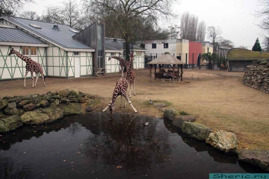 Амстердам Зоопарк