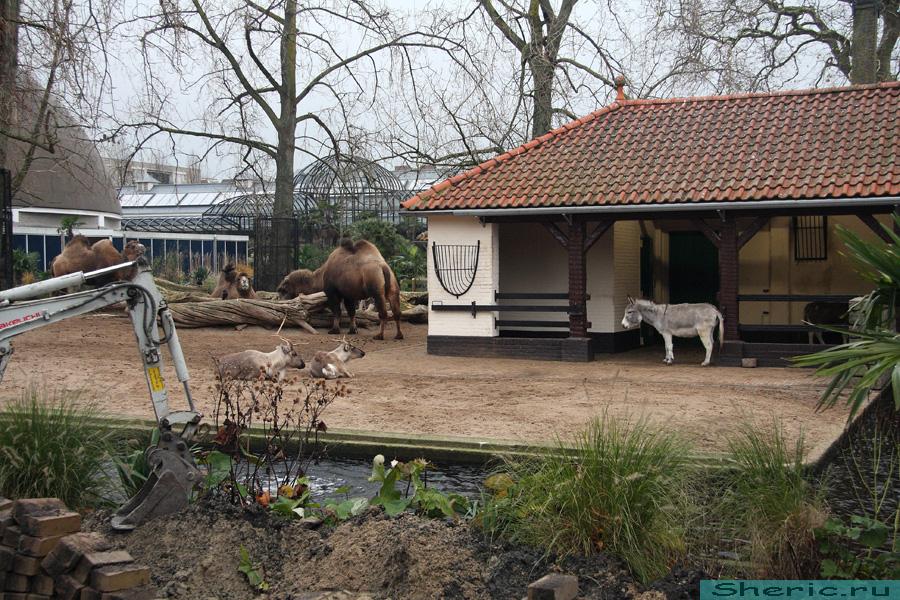 Амстердам. Зоопарк